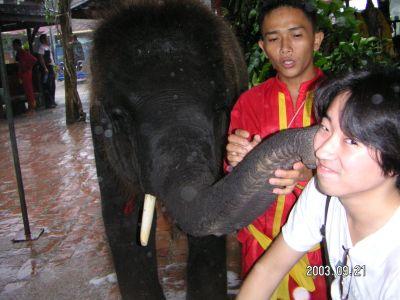 象さんと絡み合う
