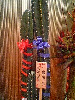サボテン from 草薙くんw